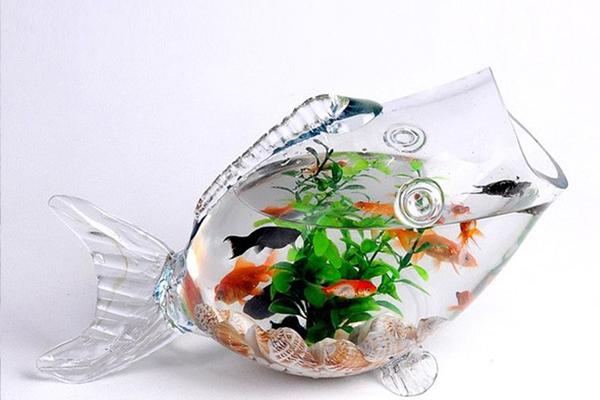quà tặng bể cá mini